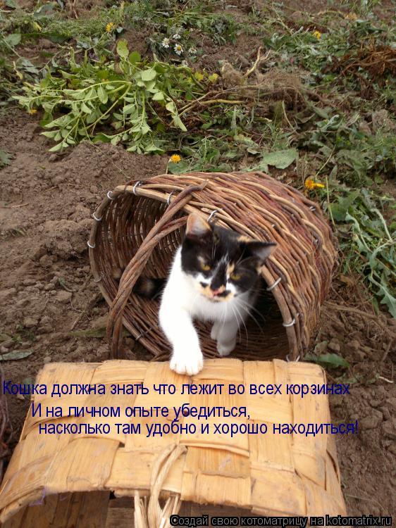 Котоматрица: Кошка должна знать что лежит во всех корзинах И на личном опыте убедиться, насколько там удобно и хорошо находиться!