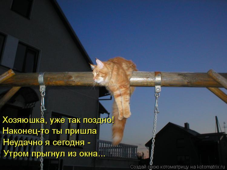 Котоматрица: Хозяюшка, уже так поздно! Наконец-то ты пришла Неудачно я сегодня - Утром прыгнул из окна...