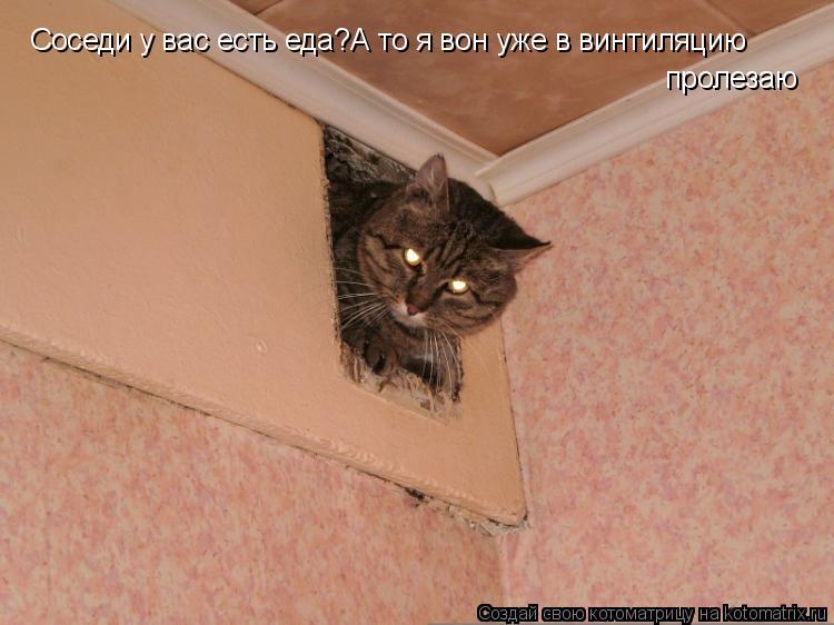 Котоматрица: Соседи у вас есть еда?А то я вон уже в винтиляцию пролезаю