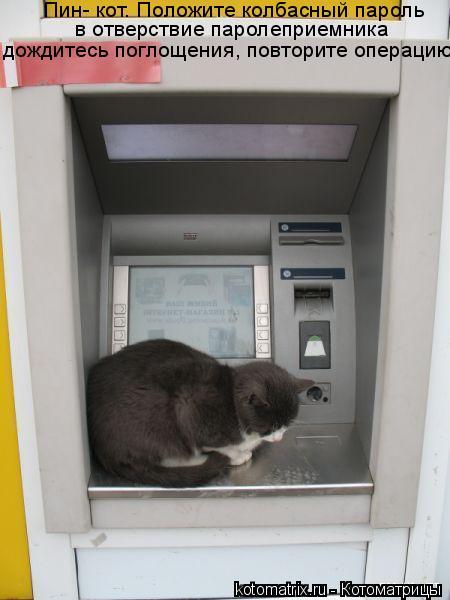 Котоматрица: Пин- кот. Положите колбасный пароль в отверствие паролеприемника дождитесь поглощения, повторите операцию