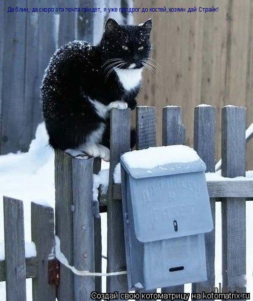 Котоматрица: Да блин, да скоро эта почта придёт, я уже продрог до костей,хозяин дай Страйк!