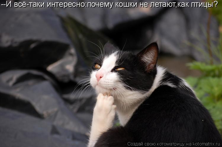 Котоматрица: --И всё-таки интересно:почему кошки не летают,как птицы?