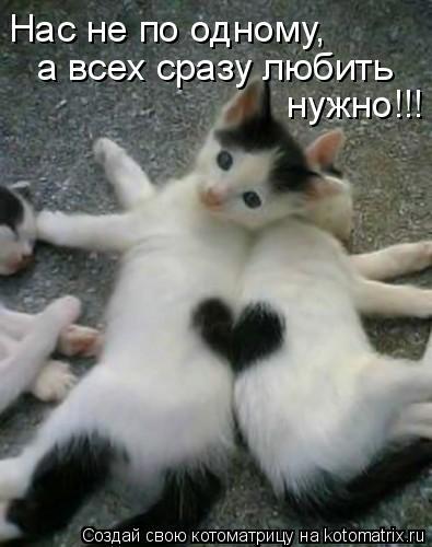 Котоматрица: Нас не по одному, а всех сразу любить нужно!!!