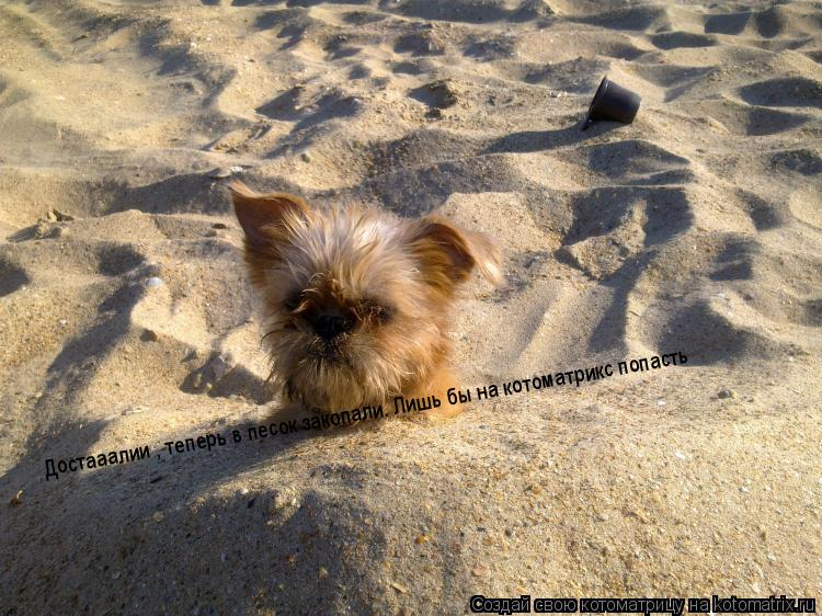 Котоматрица: Достааалии , теперь в песок закопали. Лишь бы на котоматрикс попасть
