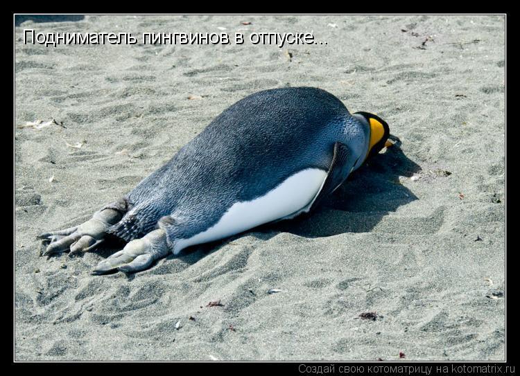 Котоматрица: Подниматель пингвинов в отпуске...