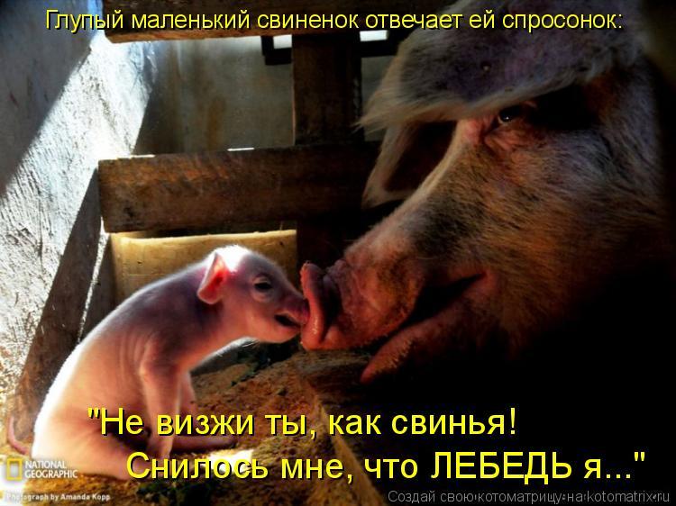 """Котоматрица: Глупый маленький свиненок отвечает ей спросонок: """"Не визжи ты, как свинья!  Снилось мне, что ЛЕБЕДЬ я..."""""""
