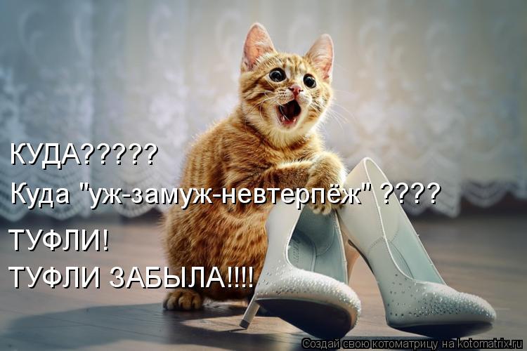 """Котоматрица - КУДА????? Куда """"уж-замуж-невтерпёж"""" ???? ТУФЛИ!  ТУФЛИ ЗАБЫЛА!!!!"""