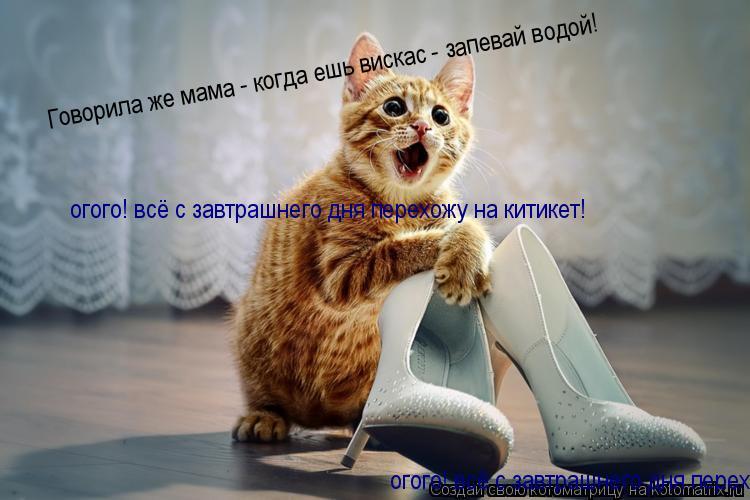 Котоматрица: Говорила же мама - когда ешь вискас - запевай водой!  огого! всё с завтрашнего дня перехожу на китикет! огого! всё с завтрашнего дня перехожу н
