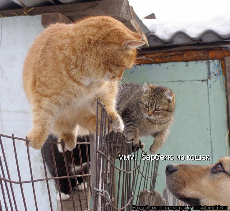 Котоматрица: ммм.. барбекю из кошек