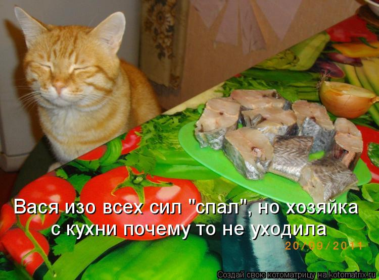 """Котоматрица: Вася изо всех сил """"спал"""", но хозяйка с кухни почему то не уходила"""