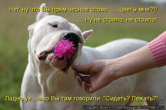 Котоматрица - Нет, ну что Вы прям чесное слово ..... цветы мне?!!  .... Ну не стоило