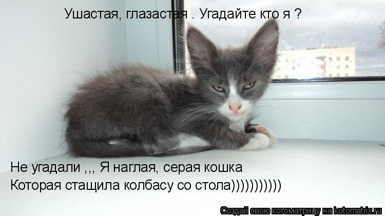 Котоматрица: Ушастая, глазастая . Угадайте кто я ? Не угадали ,,, Я наглая, серая кошка  Которая стащила колбасу со стола)))))))))))