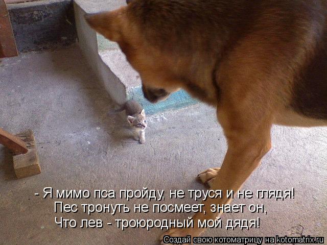 Котоматрица: - Я мимо пса пройду, не труся и не глядя! Пес тронуть не посмеет, знает он, Что лев - троюродный мой дядя!
