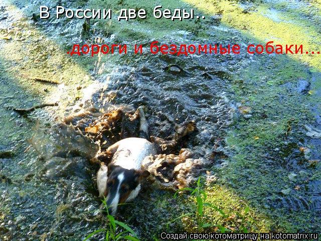 Котоматрица: В России две беды.. .дороги и бездомные собаки...