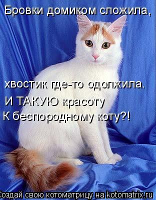 Котоматрица: Бровки домиком сложила, хвостик где-то одолжила. И ТАКУЮ красоту  К беспородному коту?!