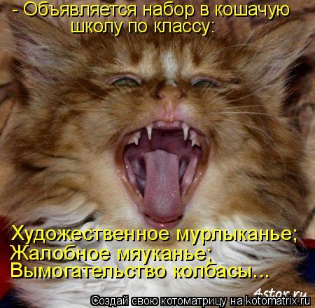 Котоматрица: - Объявляется набор в кошачую школу по классу: Художественное мурлыканье; Жалобное мяуканье; Вымогательство колбасы...