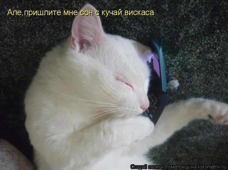 Котоматрица: Але,пришлите мне сон с кучай вискаса