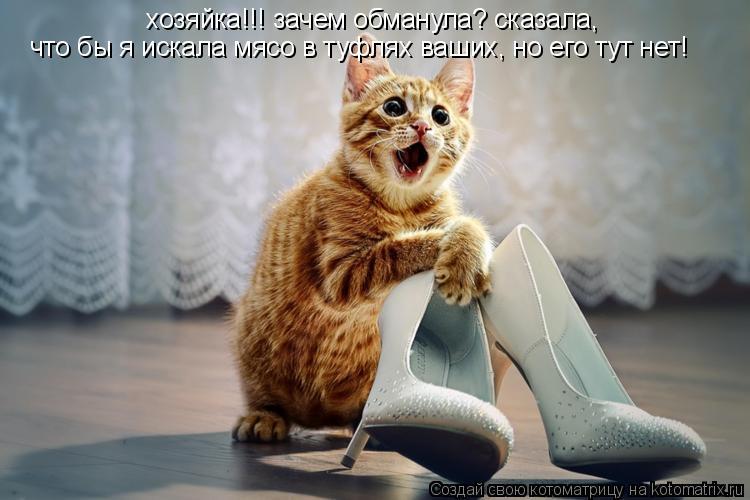 Котоматрица: хозяйка!!! зачем обманула? сказала, что бы я искала мясо в туфлях ваших, но его тут нет!