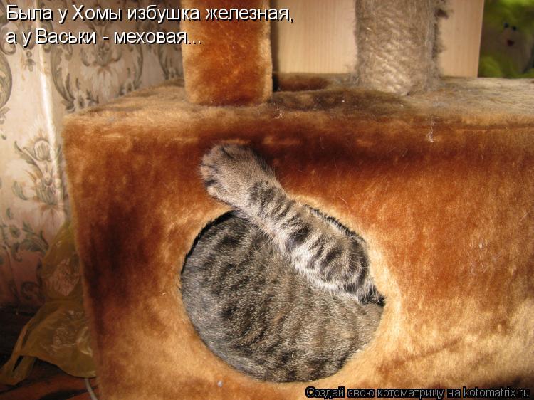 Котоматрица: Была у Хомы избушка железная, а у  а у Васьки - меховая...
