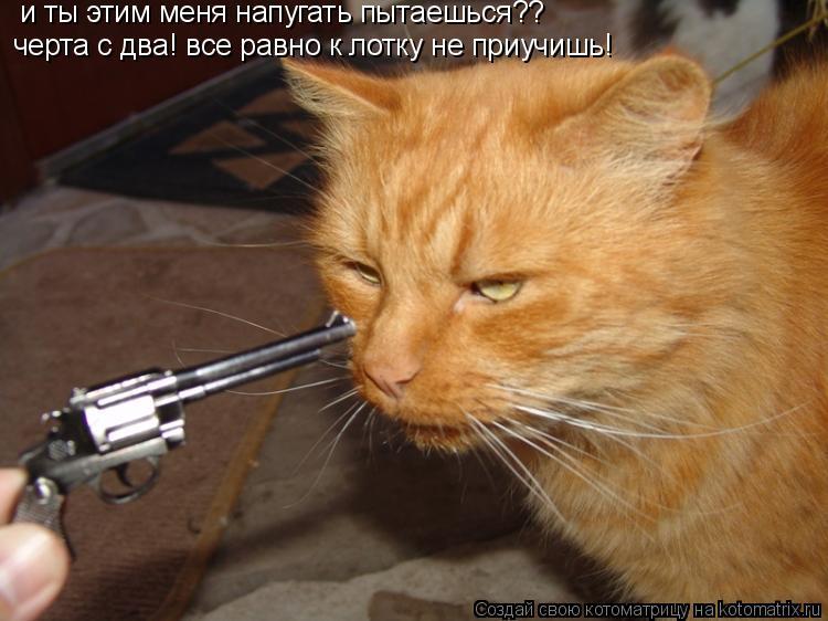 Котоматрица: и ты этим меня напугать пытаешься?? черта с два! все равно к лотку не приучишь!