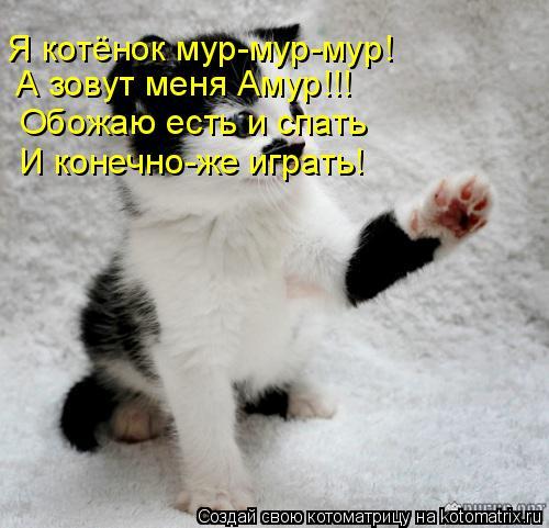 Котоматрица: Я котёнок мур-мур-мур! А зовут меня Амур!!! Обожаю есть и спать И конечно-же играть!