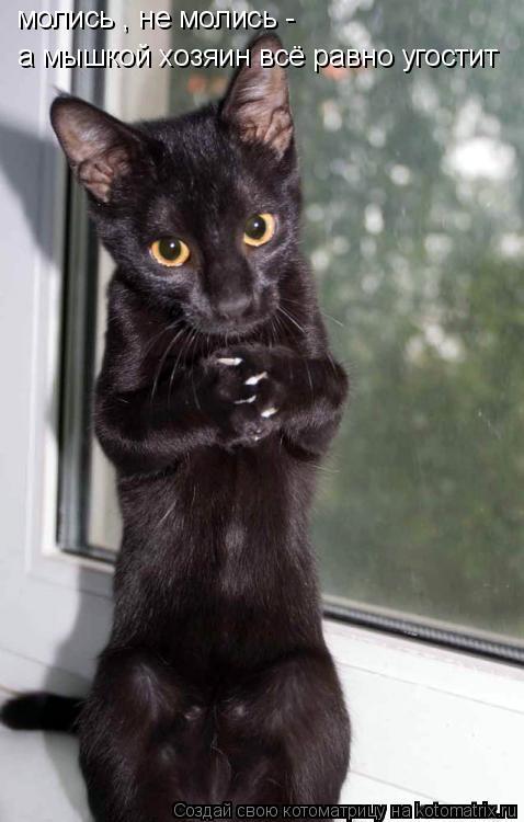Котоматрица: молись , не молись -  а мышкой хозяин всё равно угостит