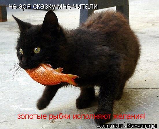 Котоматрица: не зря сказку мне читали  золотые рыбки исполняют желания!