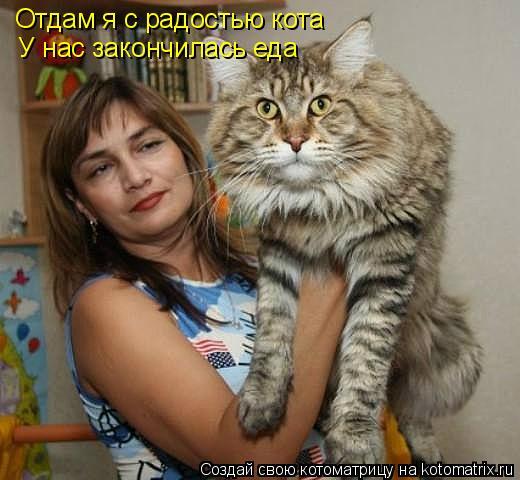 Котоматрица: Отдам я с радостью кота У нас закончилась еда