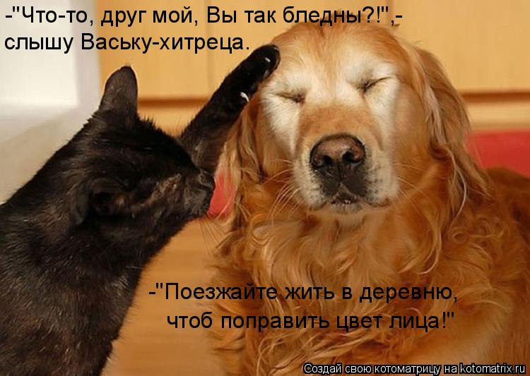 """Котоматрица: -""""Что-то, друг мой, Вы так бледны?!"""",- слышу Ваську-хитреца. -""""Поезжайте жить в деревню, чтоб поправить цвет лица!"""""""