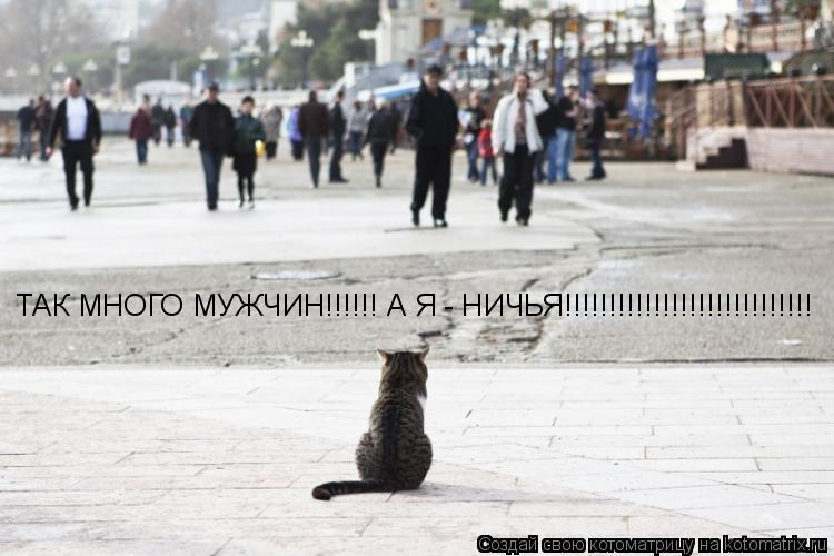 Котоматрица: ТАК МНОГО МУЖЧИН!!!!!! А Я - НИЧЬЯ!!!!!!!!!!!!!!!!!!!!!!!!!!!!