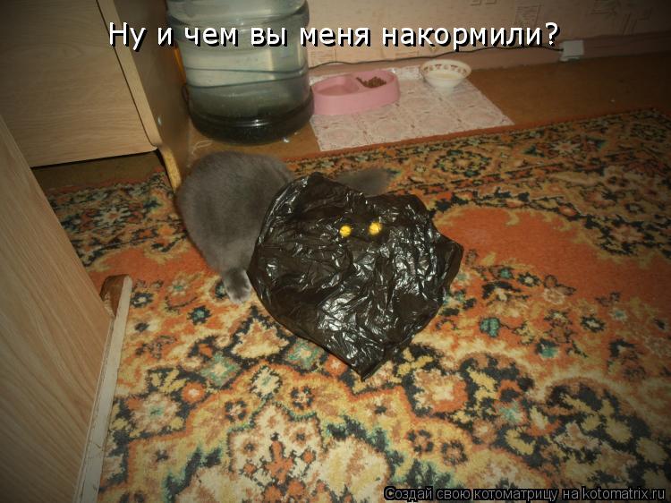 Котоматрица: Ну и чем вы меня накормили? Ну и чем вы меня накормили?