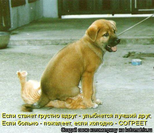 Котоматрица: Если станет грустно вдруг - улыбнется лучший друг, Если больно - пожалеет, если холодно - СОГРЕЕТ