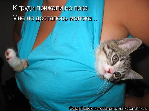 Котоматрица: К груди прижали,но пока, Мне не досталось молока...