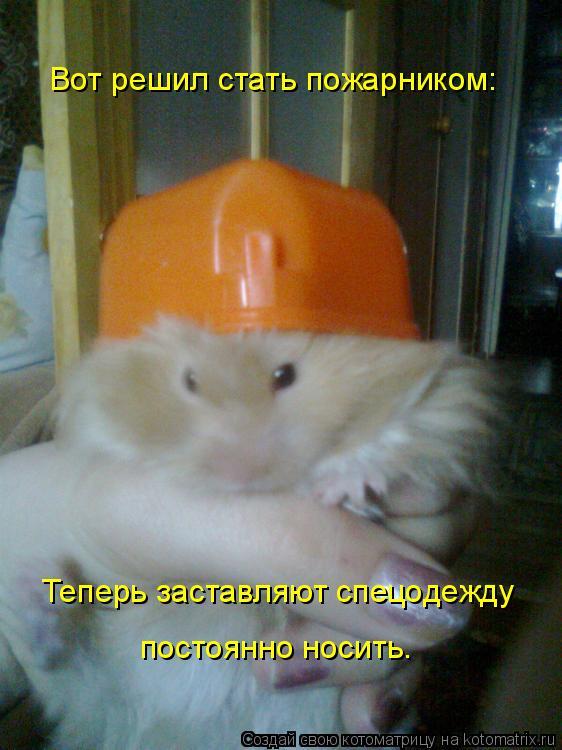 Котоматрица: Вот решил стать пожарником: Теперь заставляют спецодежду постоянно носить.