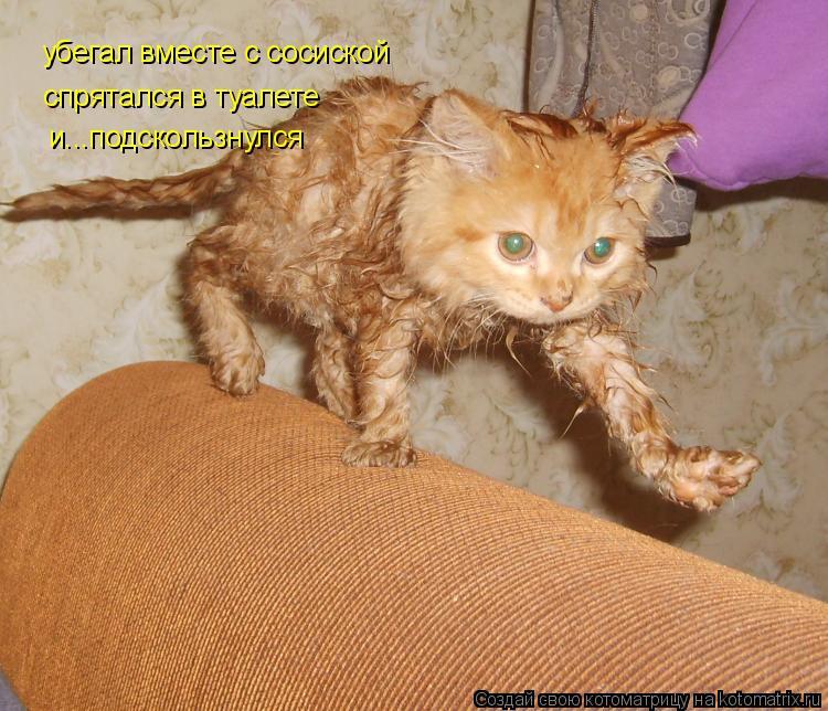 Котоматрица: убегал вместе с сосиской спрятался в туалете и...подскользнулся