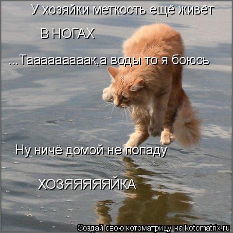 Котоматрица: У хозяйки меткость ещё живёт В НОГАХ Ну ничё домой не попаду ...Тааааааааак,а воды то я боюсь ХОЗЯЯЯЯЯЙКА