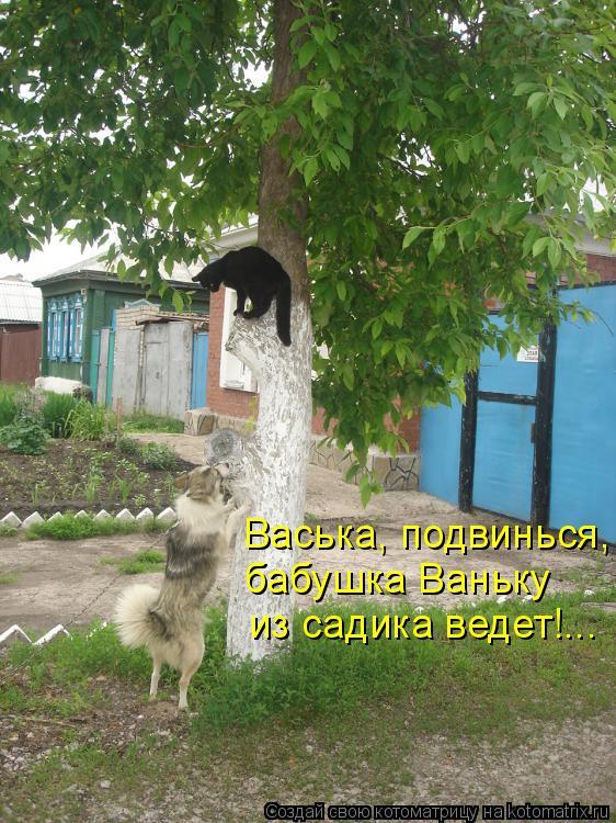 Котоматрица: Васька, подвинься, бабушка Ваньку  из садика ведет!...