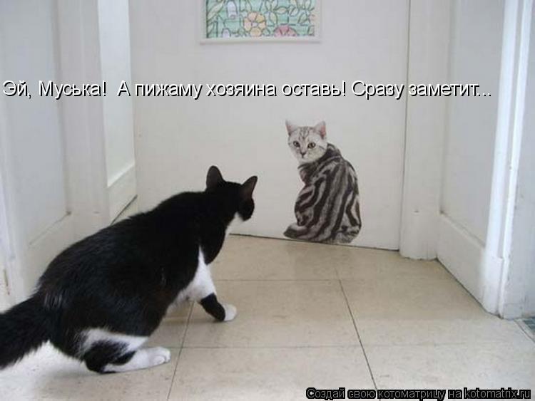 Котоматрица: Эй, Муська!  А пижаму хозяина оставь! Сразу заметит...