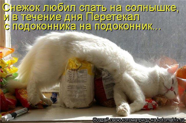 Котоматрица: Снежок любил спать на солнышке, и в течение дня Перетекал  с подоконника на подоконник...