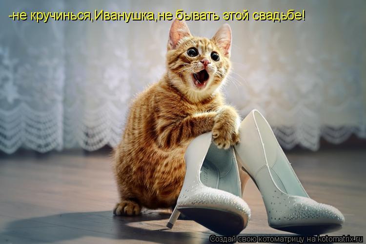 Котоматрица: -не кручинься,Иванушка,не бывать этой свадьбе!