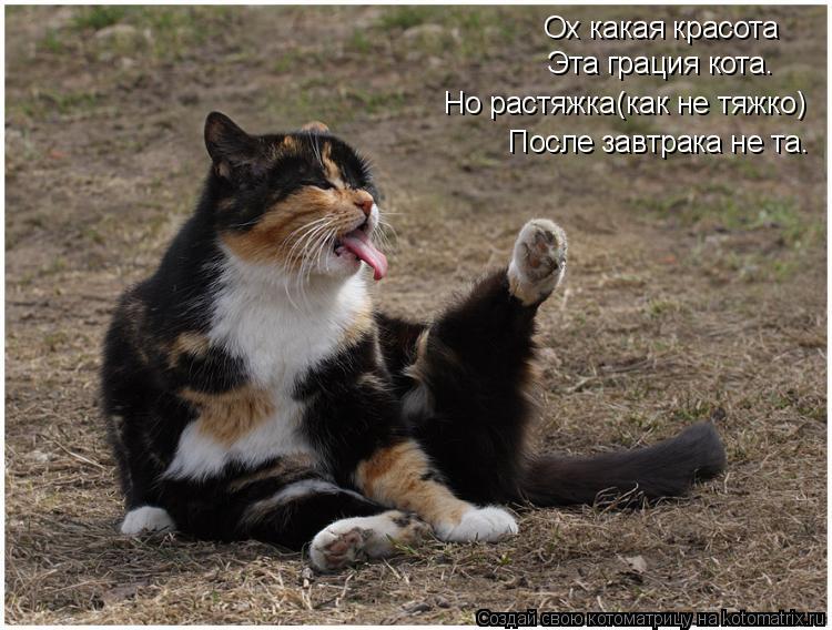 Котоматрица: Ох какая красота Эта грация кота. Но растяжка(как не тяжко) После завтрака не та.