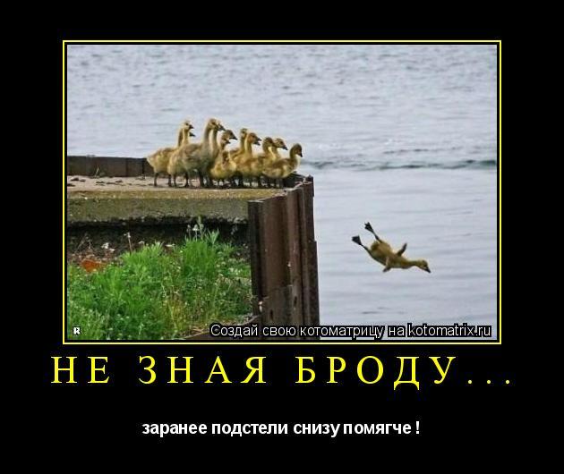 Котоматрица: Не зная броду... заранее подстели снизу помягче !