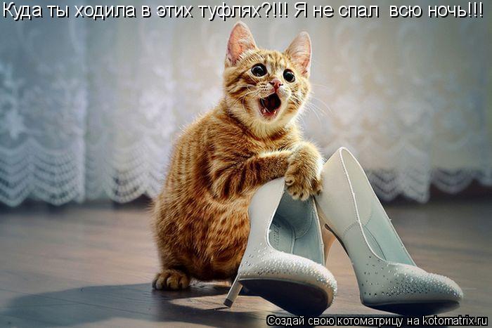 Котоматрица: Куда ты ходила в этих туфлях?!!! Я не спал  всю ночь!!!