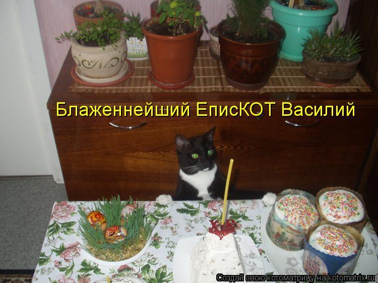 Котоматрица: Блаженнейший ЕписКОТ Василий