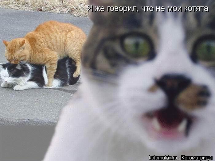 Котоматрица: Я же говорил, что не мои котята