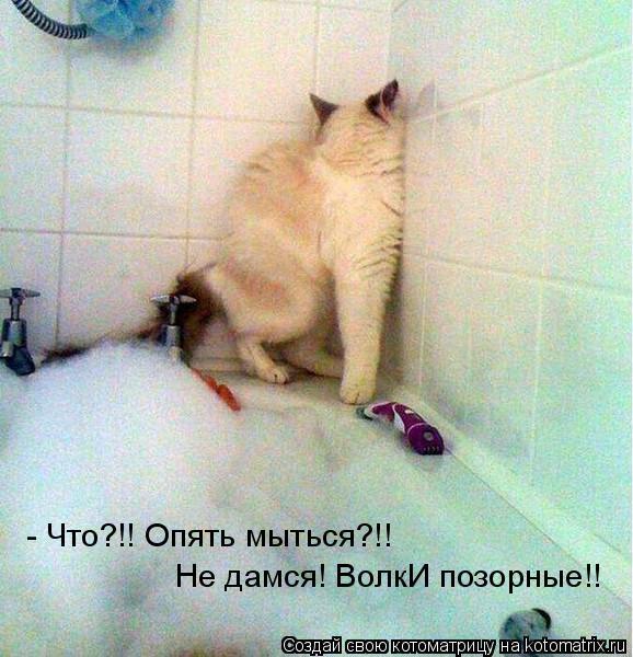 Котоматрица: Не дамся! ВолкИ позорные!! - Что?!! Опять мыться?!!