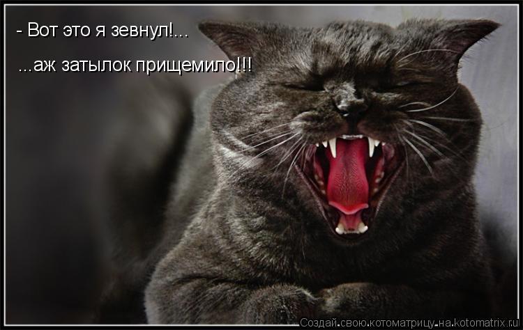 Котоматрица: - Вот это я зевнул!... ...аж затылок прищемило!!!