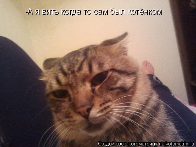 Котоматрица: -А я вить когда то сам был котёнком