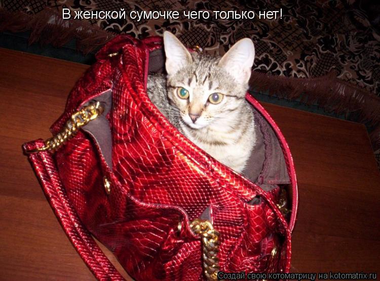 Котоматрица: В женской сумочке чего только нет!