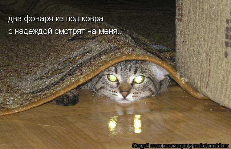 Котоматрица: два фонаря из под ковра с надеждой смотрят на меня...
